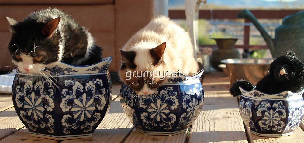 Potted Grump - Grumpy Cat and Pokey by Grumpy Cat