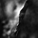 Leaf - Black and White Macro Photo by William Martin