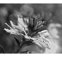 Black and White Flower Macro Photographic Print