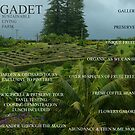 Introducing Gadet, Norfolk Island NSW 2899 by grarbaleg