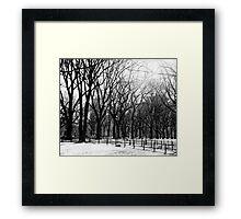 Central Park trees Framed Print