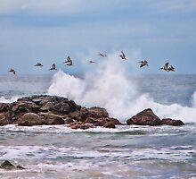 Pelican Break by Tracy Riddell