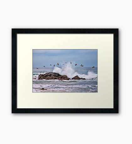 Pelican Break Framed Print