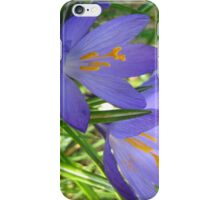 Purple Crocuses in Early Spring iPhone Case/Skin