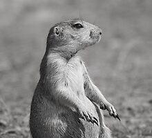 Mr. Marmotini by Alex Preiss