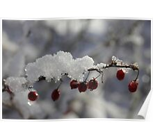 Red Berries in the Snow Poster