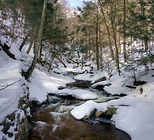 Climbing Ganoga Glen Trail To Erie Falls by Gene Walls