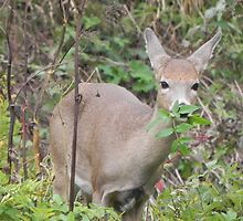 Young Deer at Lunch by Martha Medford