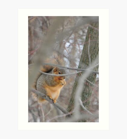 Squirrel eating on branch Art Print