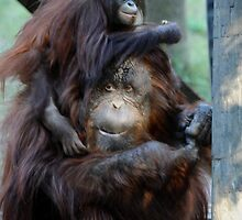 Orangutan Mom and Baby  by venny