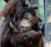 Orangutan Mom and Baby  by Savannah Gibbs