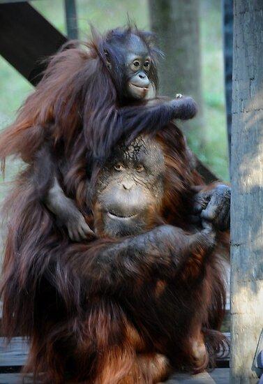 Orangutan Mom and Baby  by venny