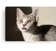 Kitten got your tongue Canvas Print