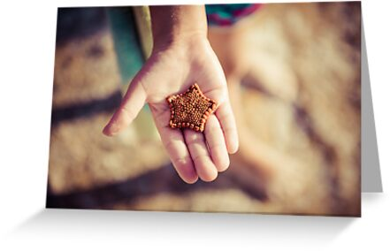 Biscuit Sea Star by Melissa Drummond