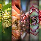 Fibonacci Rainbow  by donnarebecca