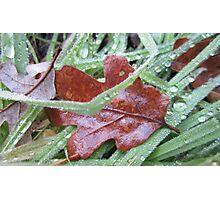 A Wet Leaf Photographic Print