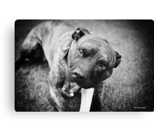Give a dog a bone Canvas Print
