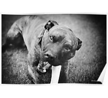 Give a dog a bone Poster