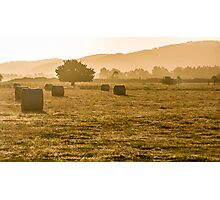 Afternoon in the Yarra Valley Photographic Print