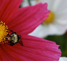 Pollination by Cindy-Lou Holland