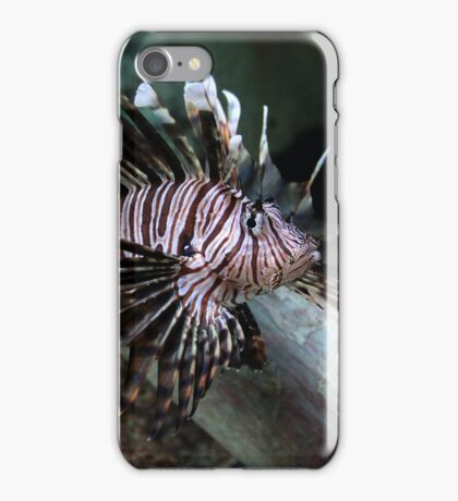 Pterois Volitans - The Red Lionfish | Riverhead, New York iPhone Case/Skin