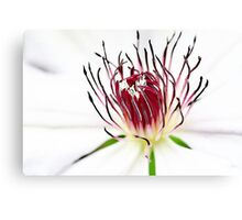 White Clematis Canvas Print