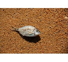 Like a Fish Out of Water Photographic Print