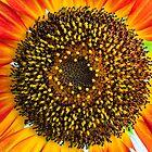 Sunflower Surprise by onemistymoo