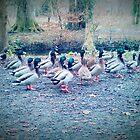 Ducks by DES PALMER