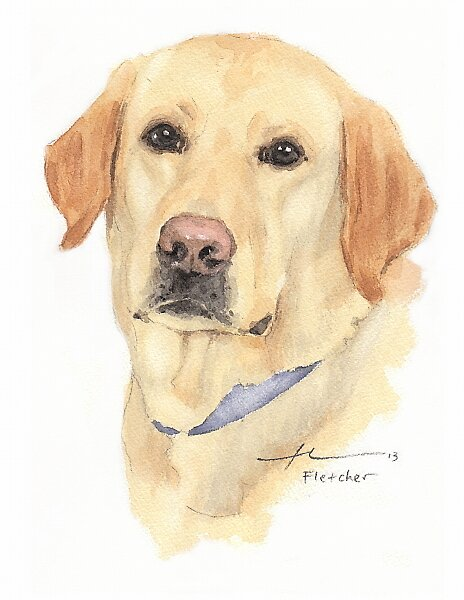 Yellow lab watercolor by Mike Theuer