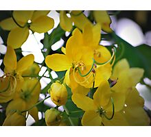 Yellow Blossom Flowers Photographic Print
