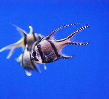 Triple fish by amylauroo