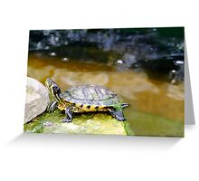 Yellow Bellied Slider Turtle Greeting Card