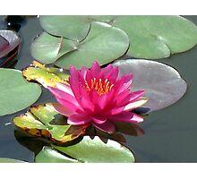 Lotus 1 Photographic Print