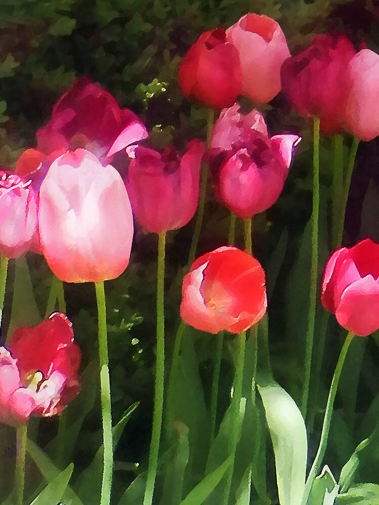 Pink Tulips in Garden by Susan Savad