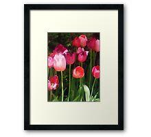 Pink Tulips in Garden Framed Print