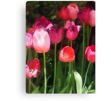 Pink Tulips in Garden Canvas Print