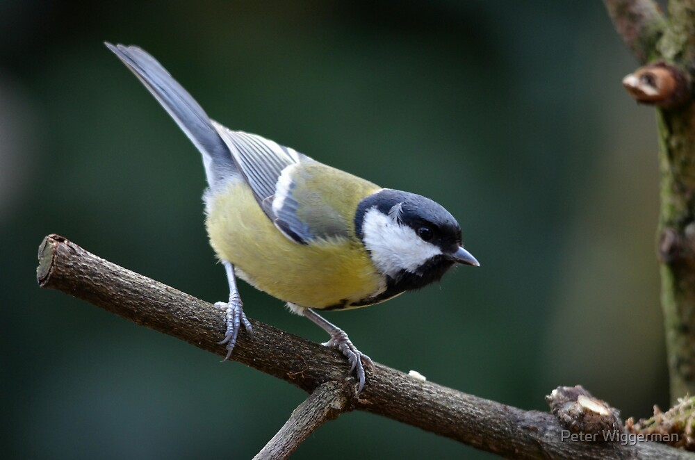 Ready for take-off by Peter Wiggerman