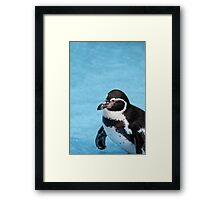Magellanic Penguin Framed Print