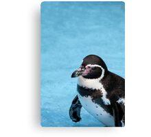 Magellanic Penguin Canvas Print