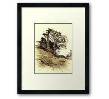 Vintage photo of pine on a precipice Framed Print