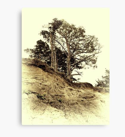 Vintage photo of pine on a precipice Canvas Print