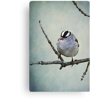 White Crowned Sparrow ~ Canvas Print