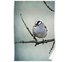 White Crowned Sparrow ~ Poster