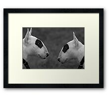 Why the Long Face ? Framed Print