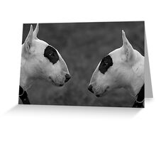 Why the Long Face ? Greeting Card