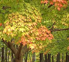A Touch of Fall in the Northeast by Lisa Cook