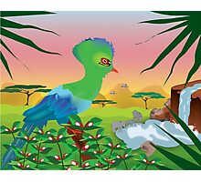 Turaco (Knysna) and African landscape Photographic Print