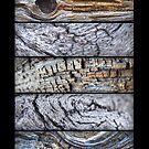 Bark Texture by donnarebecca
