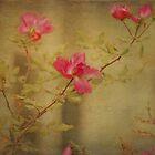 Vintage Rosebush by Scott Mitchell